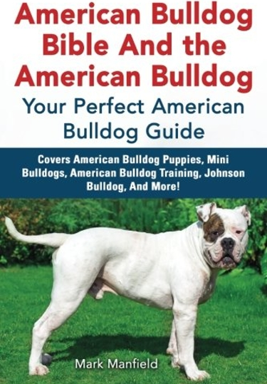Guide to the American Bulldog