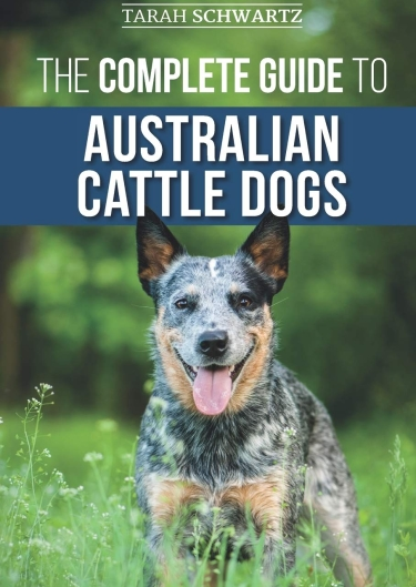 Guide to Australian Cattle Dogs