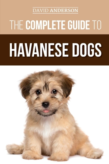 Guide to Havanese Dogs