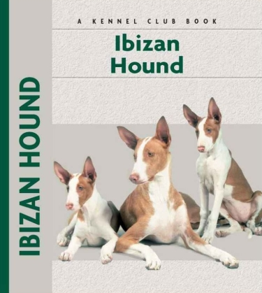 Guide to the Ibizan Hound
