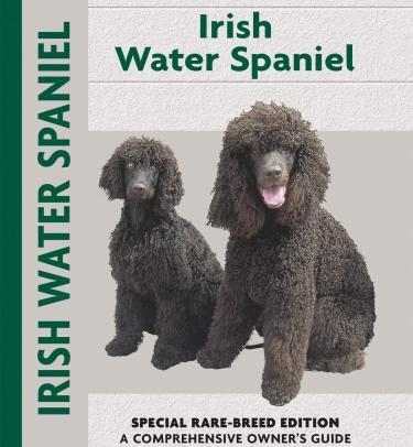 Guide to the Irish Water Spaniel