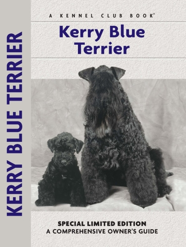 Guide to the Kerry Blue Terrier