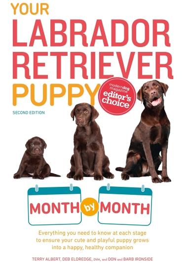 Guide to the Labrador Retriever