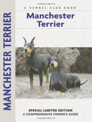 Guide to the Manchester Terrier