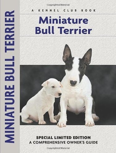 Guide to the Miniature Bull Terrier
