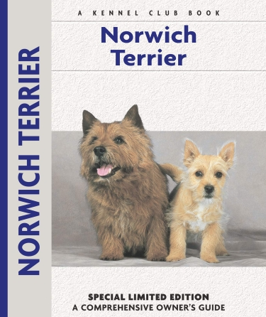 Guide to the Norwich Terrier