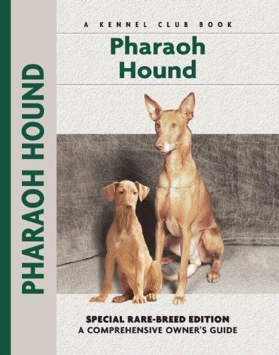 Pharaoh Hound - Rare Breed Edition