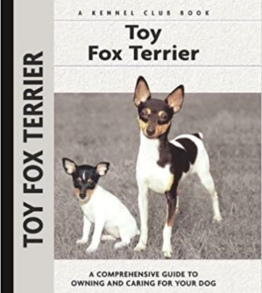 Guide to the Toy Fox Terrier