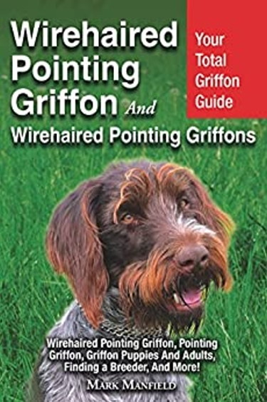 Guide to the Wirehaired Pointing Griffon