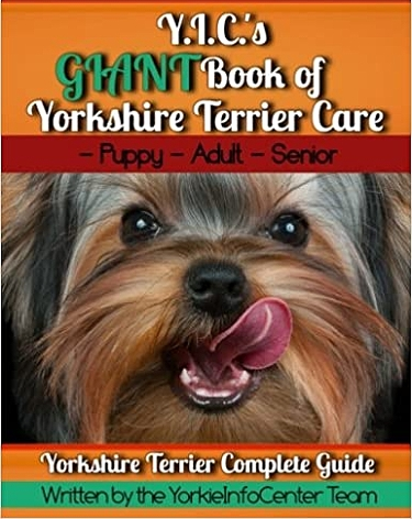Guide to the Yorkshire Terrier