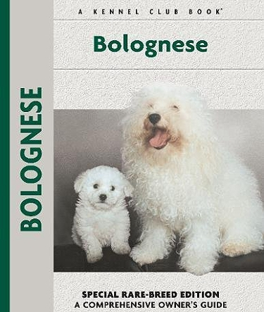 Guide to the Bolognese Dog