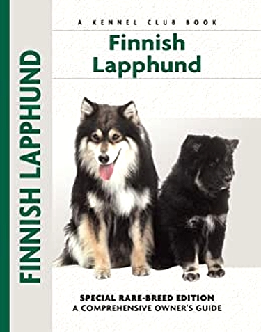 Guide to the Finnish Lapphund