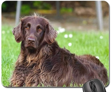 German Longhaired Pointer mouse pad